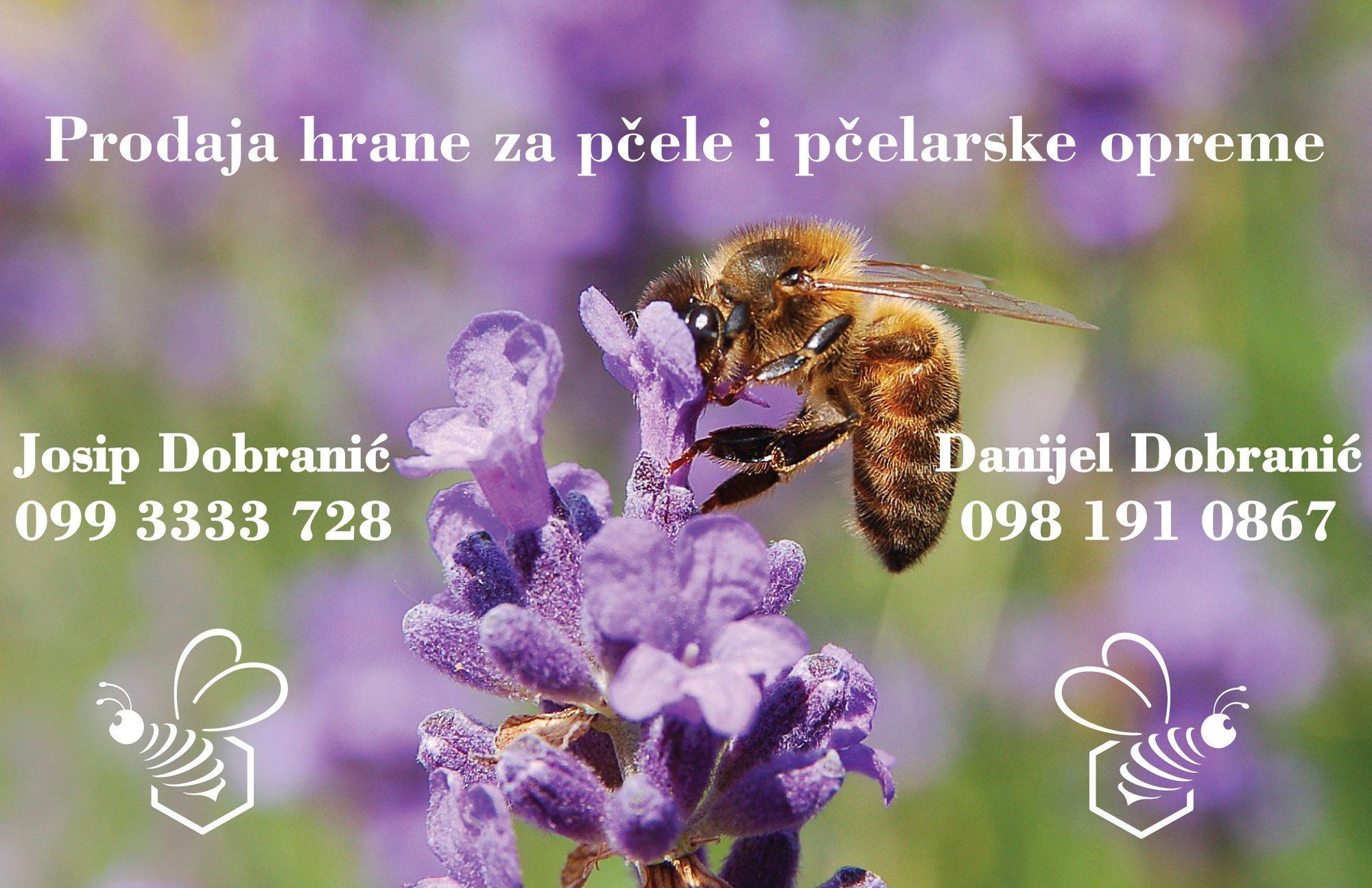 dobranic1